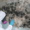Remove Mold Odor